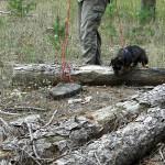 Over a log