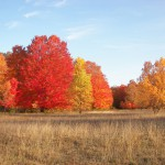 Fall color bordering tracking field