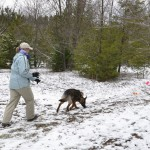 Tracking in light snow allows the handler to see how closely the dog is following the track