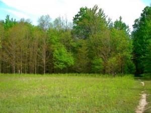 Woods and fields meet
