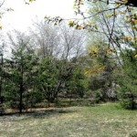 Mixed trees in open woods
