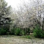 flowering trees in tracking field