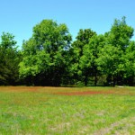 Across the field to hardwood forest