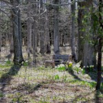 Open woods to track through