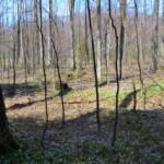 Open woods on east