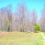 Northern edge of Lab Land is the treeline