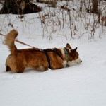 winter tracking